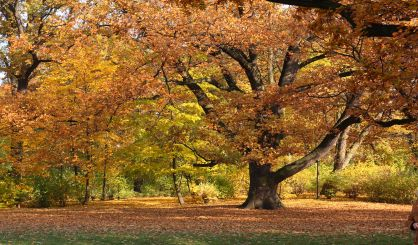 road-association-predicts-fall-color-peak-next-month