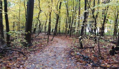 parks-surveys-underway-in-van-buren,-cass-counties